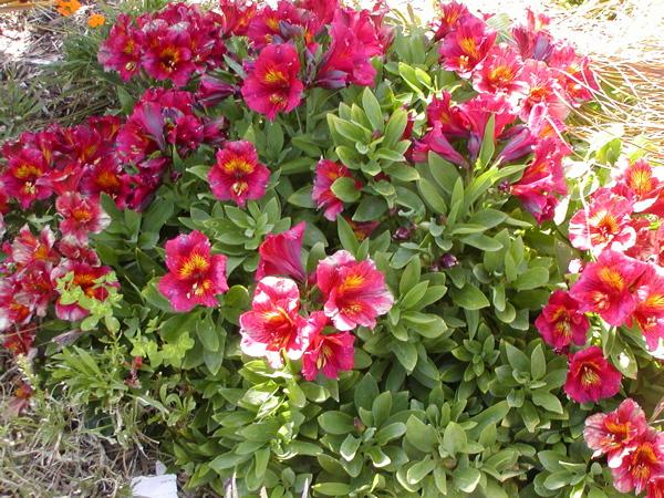 Morro Bay flowers