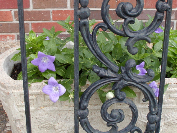 purple flower wrought iron